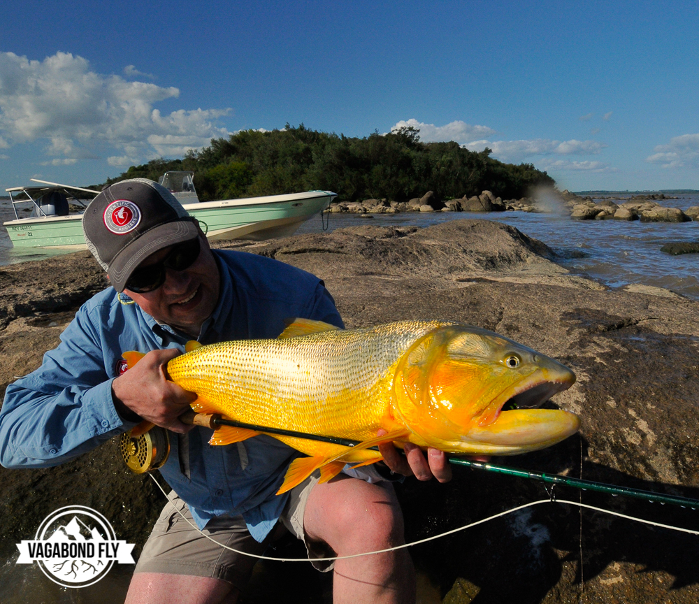 One of my favorite fish pics and one that was a long time coming to get checked off my bucket list. Golden Dorado from Parana River, Argentina